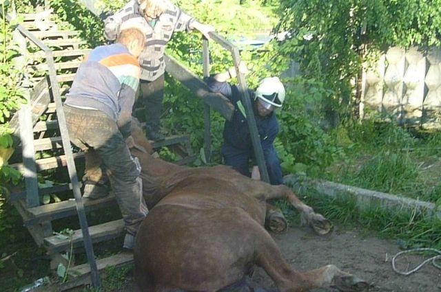 Хозяева думали, что в результате инцидента лошадь сломала ногу, однако в итоге всё оказалось в порядке