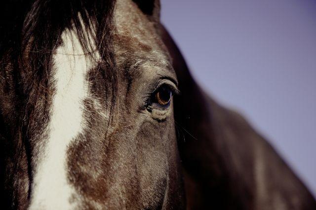 6-летний мальчик погиб под копытом лошади.