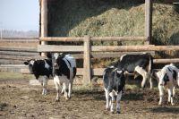 Аграрии не успевают заготовить корма для животных.