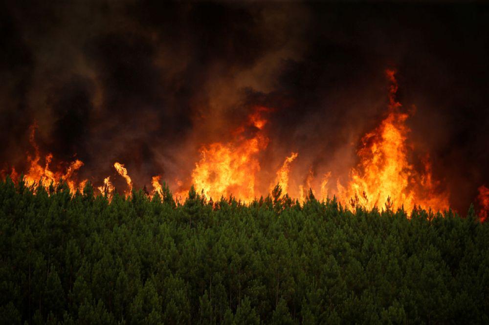Лесной пожар возле деревни Карвоэйру недалеко от Каштелу-Бранку, Португалия.