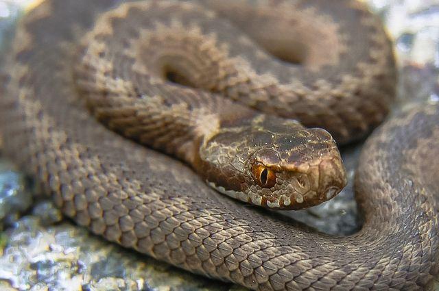Сначала змею, укусившую подростка извловили, а потом выбросили.