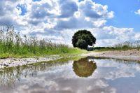 Что делать местным фермерам, если поля вымокают под проливными дождями?