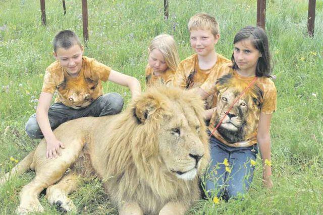 Со львами могут фотографироваться даже дети.
