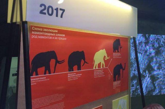 Пермский трогонтериевый слон может стать самой крупной палеонтологической находкой представителя древних хоботовых.