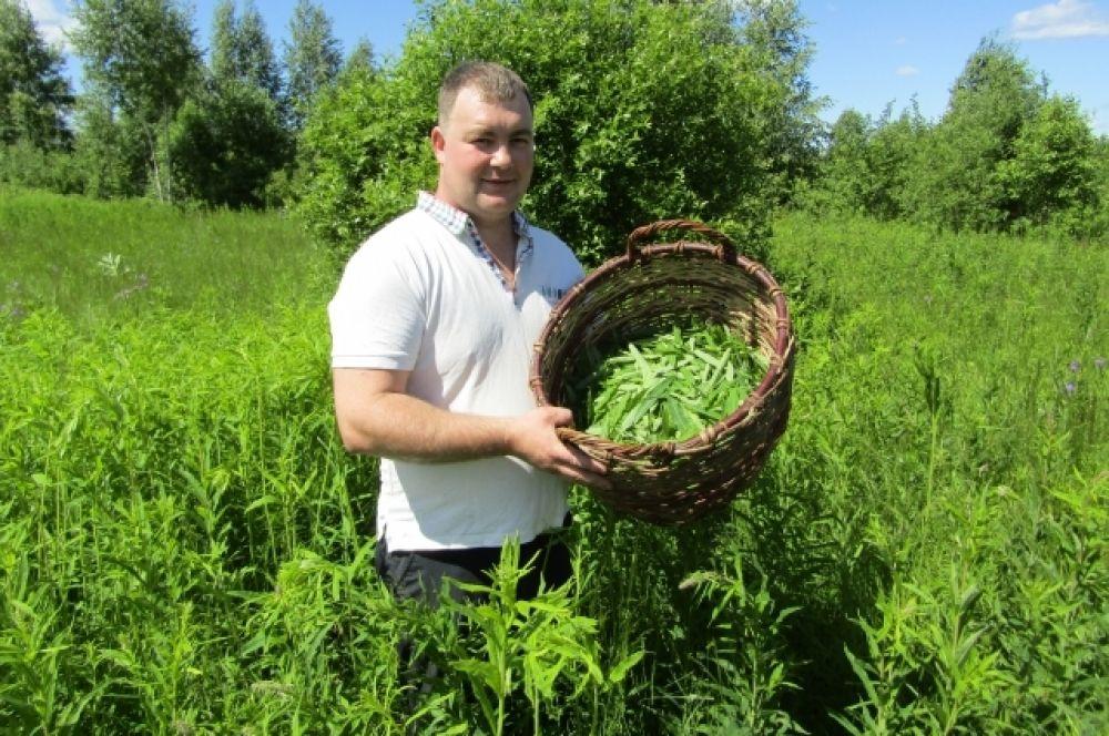 Жители Тверской области приступили к сбору иван-чая (18 июля)
