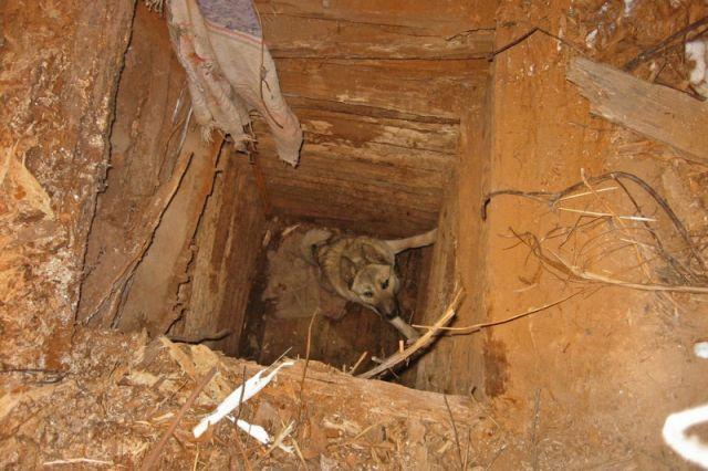 Пес три дня просидел в колодце.