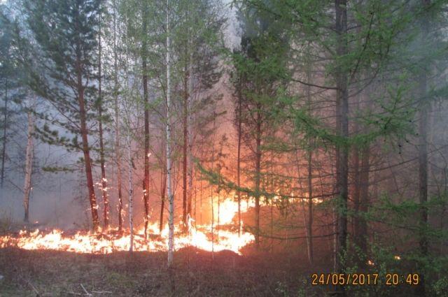 За прошедшие сутки на территории края ликвидировали 8 лесных пожаров на площади 113 га.