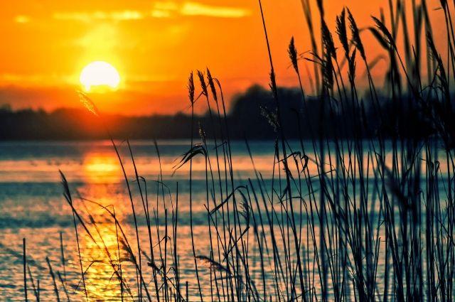 В Оренбурге в озере Тимошко утонул ребенок.