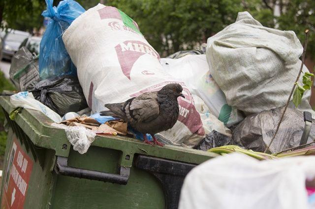 Собранный на улицах Нового Уренгоя мусор вывозят сотни грузовиков