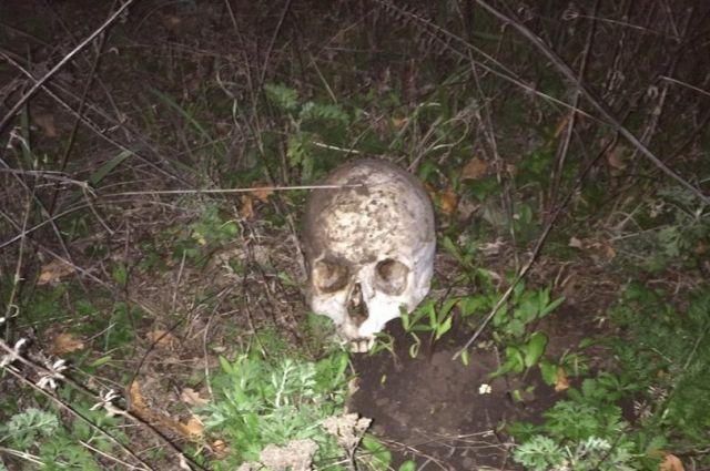 Картинки по запросу женщина нашла скелет человека