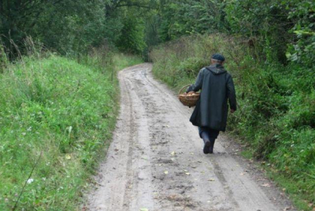 ВОстровском пропавшего грибника искали двое суток