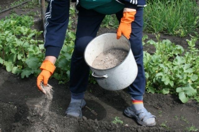 Губкинские дачники собирают богатый урожай овощей