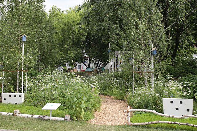 «Московский ковчег»: берёзы, травы, птицы.