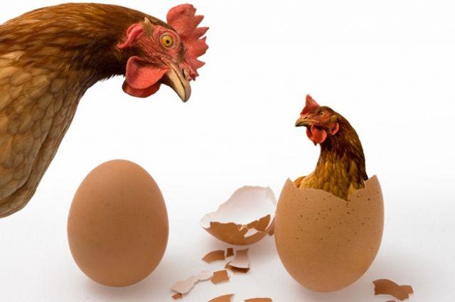 Эксперт утверждает, что рынок курятины в Украине монополизирован