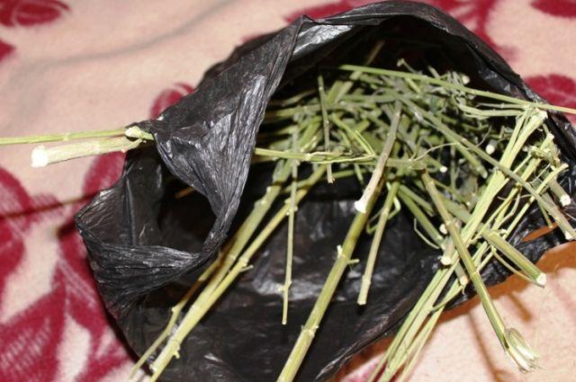Полицейские изъяли порядка 40 кустов конопли, а также высушенные части растения, которые хозяйка дачного дома хранила в диване. Общая  масса наркотика составила около 300 граммов.