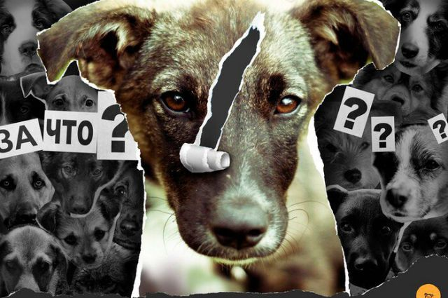 Великовозрастные живодеры из поселка Винзили вбивали гвозди в голову собаки