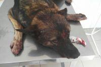 Тюменские живодеры, которые забивали гвозди в собаку, начали мстить соседям