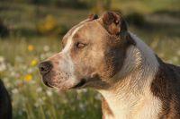 «Бессовестная»: тюменцы возмущены выгулу собак на газонах у жилых домов