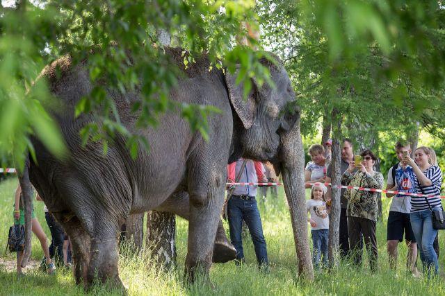 Цирковой слон несомненно поможет нижегородцам врок-субботнике наГребном канале
