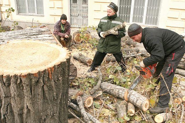 На Ветлужанке спилят 283 дерева.