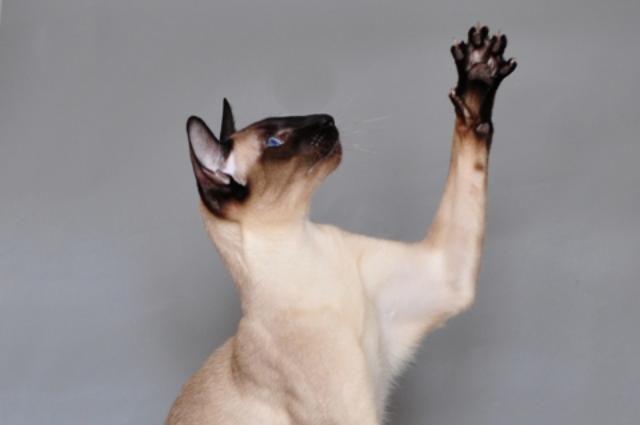 Тюменский кот Васька стал звездой Инстаграма