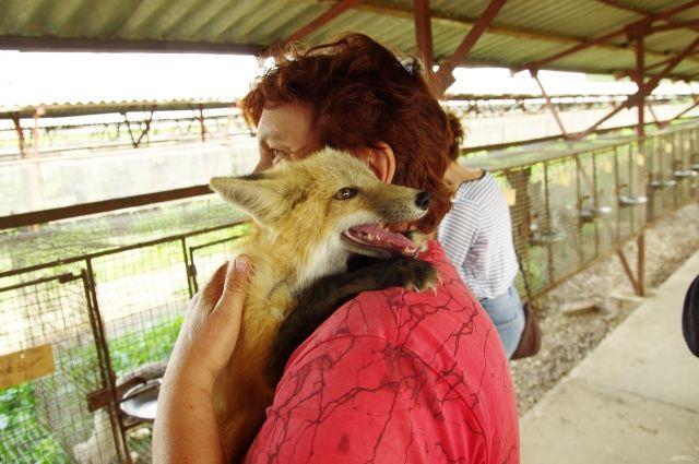 Добрых лисиц можно брать на руки