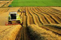 Аарендатор платит собственнику в среднем чуть более тысячи гривен за гектар в год