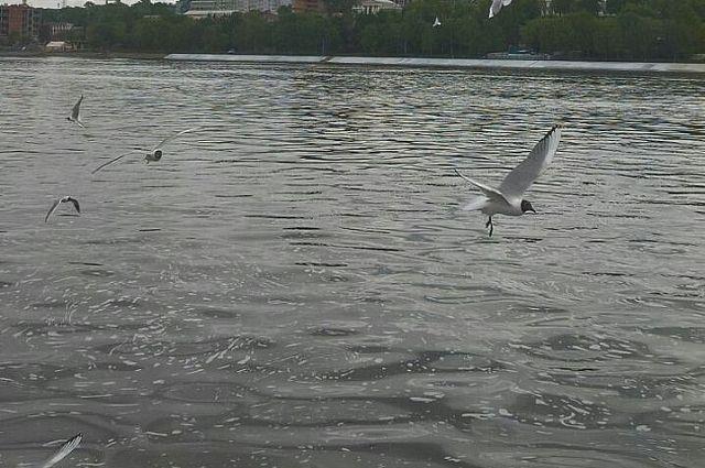 В Прикамье растёт число происшествий с рыбаками.