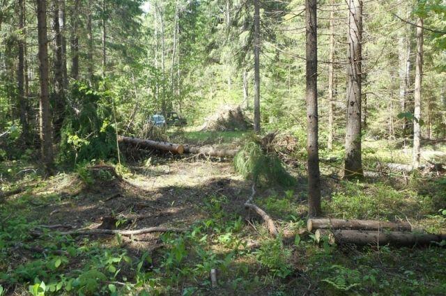 ВСудогодском районе задержаны 2 мужчины за нелегальную вырубку леса
