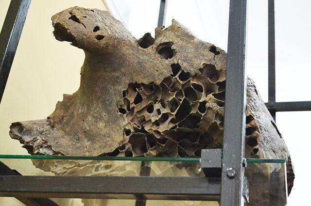 Кости древнейших обитателей планеты были найдены в Ачинском районе.