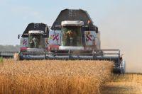 В Краснодарском крае и Ростовской области намолотили высокий урожай в 2017 году.