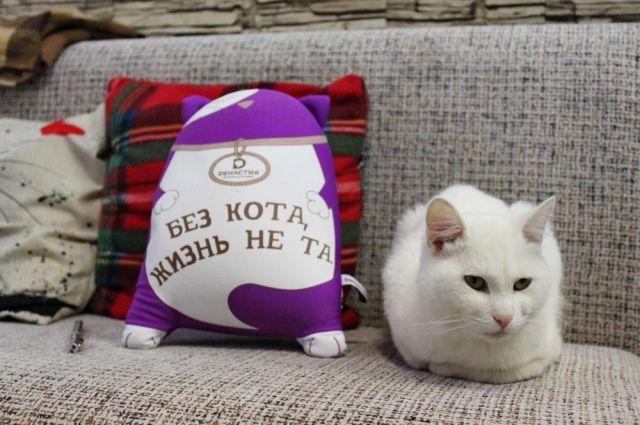 «Без кота жизнь не та» - с этим утверждением немногие решатся поспорить.