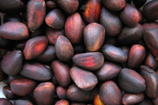 Стало известно, когда кузбассовцам можно будет собирать кедровый орех.