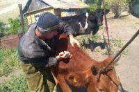Фермер в одиночку ведёт борьбу с инфекционным заболеванием.