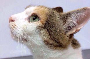 Кошку Ульяну выбросили из квартиры как ненужное наследство.