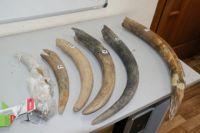 На Ямале студентка обнаружила останки мамонта