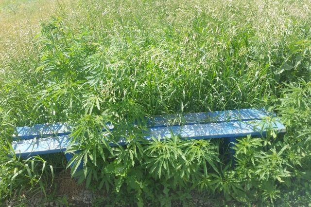 На Ямале растёт наркотрафик