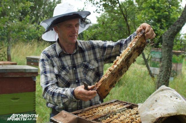 Юрий Гнатенко: «Пчел нужно любить и уважать».