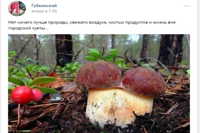 В Тазовском районе начинает работу заготконтора по сбору ягод и грибов
