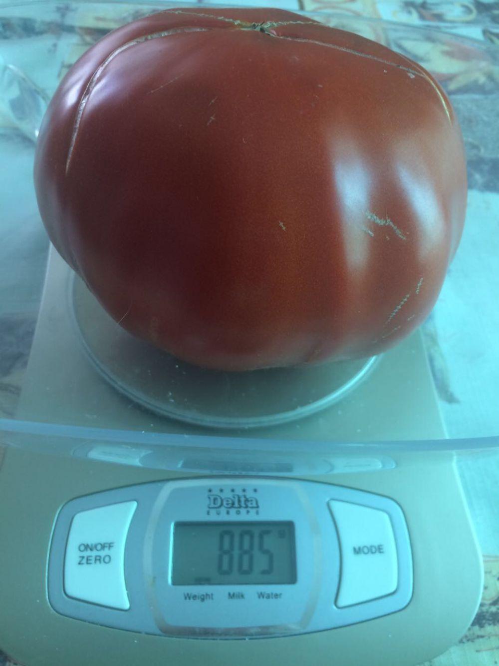 Эльвира Журавлёва прислала фото томата весом больше 800 гр., который вырастила на своём огороде Валентина Ивановна Урясьева из ст. Новотроицкой