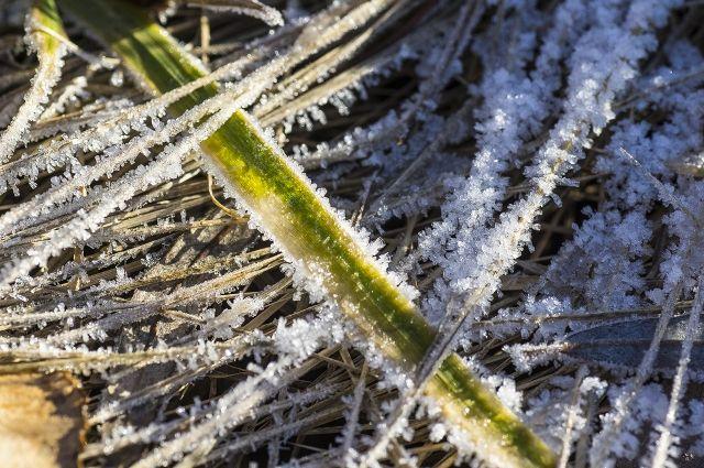 В Тюменскую область пришли заморозки