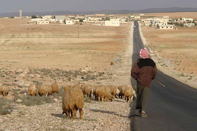 Детей дагестанцев, завербованных ИГИЛ* вСирию иИрак, возвратят на отчизну
