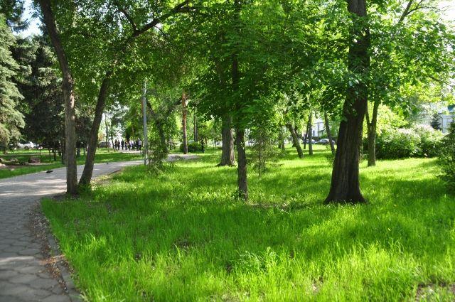 Деревья - это не только эстетика, но и защита от выбросов.