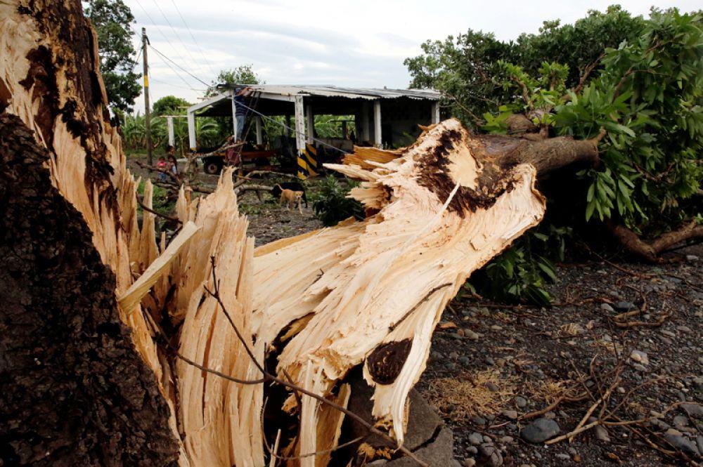 Упавшее дерево рядом с домом после урагана «Франклин» в Вега де Алаторе в штате Веракрус.