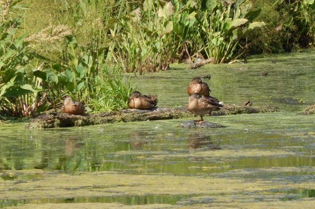 В Пензенской области открывается летне-осенний сезон охоты