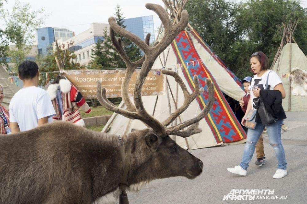 Посетители могли увидеть настоящего северного оленя.