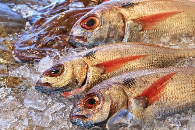 Лимиты для вылова природных биоресурсов установили в Тюменской области