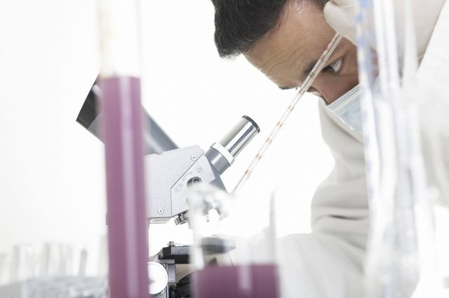 В английских клиниках заразили две сотни пациентов «японским грибком»