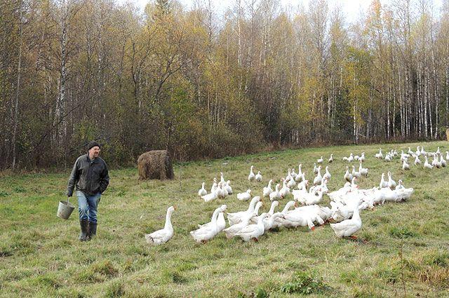 Корма для животных на зиму частично придётся закупать.