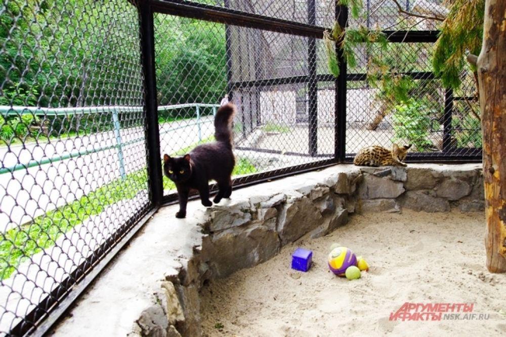 Две кормилицы в дальнейшем останутся жить при зоопарке, либо их заберут работники зоосада потому, что очень сильно привязались к любимцам.